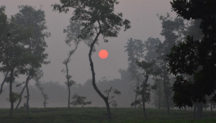 চা-বাগানে শীতের সকালে ভোরের সূর্যোদয় (ছবি : প্রিতম পাল)