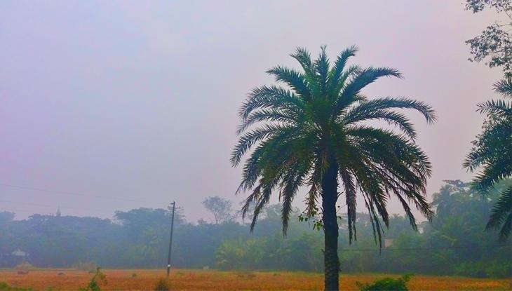 শীতের সকালে নোয়াখালীর সুবর্ণচর উপজেলার চর বৈশাখী গ্রাম। (ছবি : আরিফ সবুজ)