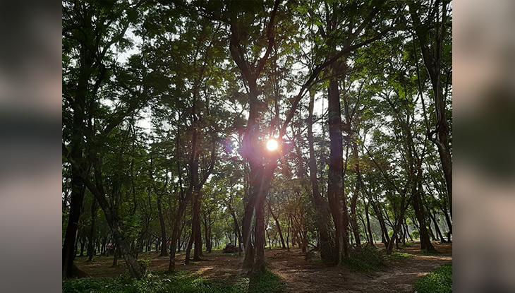 নয়নাভিরাম জাহাঙ্গীরনগর (ছবি: নাবিলা বুশরা)