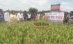 শেরপুরে বিনাধান শস্যকর্তন মাঠ দিবস অনুষ্ঠিত