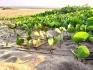 কক্সবাজারের কোলাহলশূন্য সৈকতে ফিরছে 'সাগরলতা'