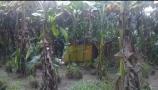 নরসিংদী