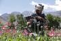 আফগানিস্তানে হামলায় ৯ পুলিশসহ ১৭ জন নিহত