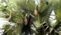বিলুপ্তির পথে 'বাবুই' পাখির বাসা