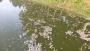 বিষে মরল পুকুরের ৬ লাখ টাকার মাছ