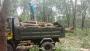 স্যানমারের ২০০ রাবার গাছ কেটে নিয়ে গেল সন্ত্রাসীরা