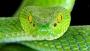 শৈলকুপায় সাপের কামড়ে গৃহবধূর মৃত্যু