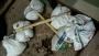 বোয়ালখালীতে পৃথক অভিযানে  ৩ মাদক কারবারি গ্রেপ্তার