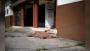 রাস্তায় যত্রতত্র মৃতদেহ, অথচ সরকারি হিসাব ৩৫০