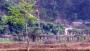 নাইক্ষ্যংছড়ির তমব্রু ইউনিয়নে বিজিবির হাই অ্যালার্ট