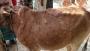 মৌলভীবাজারের ৬ হাজার গরু লাম্পি স্কিন রোগে আক্রান্ত
