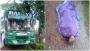 ধামরাইয়ে যাত্রীবাহী বাসচাপায় বৃদ্ধা পথচারী নিহত