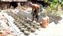করোনার প্রভাবে দিশেহারা পিরোজপুরের পাল সম্প্রদায়