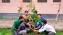 বেরোবিতে সাবেক ছাত্রলীগ নেতার উদ্যোগে বৃক্ষরোপণ কর্মসূচি