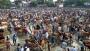 ফেনীর ১২৯টি হাট-বাজারে কোরবানির পশু বিক্রিতে স্থিতিশীলতা নেই