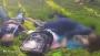 সারাদিন ঘুরে রাতে গাছতলায় বসে প্রেমিক-প্রেমিকার বিষপান!