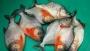 বাহুবলে বিষাক্ত পিরানহা মাছ বিক্রি, ব্যবসায়ীকে জরিমানা