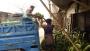 দোহাজারী কলার আড়তে জমজমাট বিকিকিনি